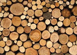 lemne de foc grosu forest